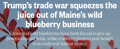 Wild Blueberry Headline